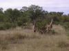 smallafrica2009-0138