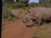 smallafrica2009-0175
