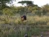 smallafrica2009-0325