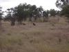 smallafrica2009-0530