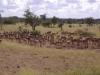 smallafrica2009-0536