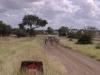 smallafrica2009-0544