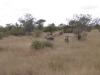 smallafrica2009-0552