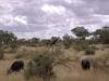 smallafrica2009-0601