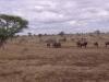 smallafrica2009-0619