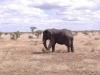 smallafrica2009-0735