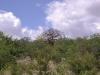 smallafrica2009-0832