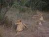 smallafrica2009-1388