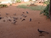 smallafrica2009-1620