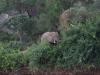 smallafrica2009-1735